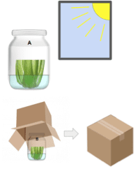 A jar with celery in sunlight, another in a box.