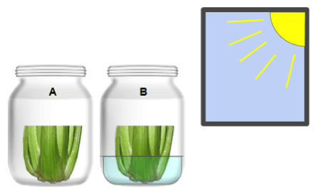 Two jars with celery in the sun
