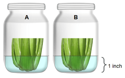 Two jars with celery and water