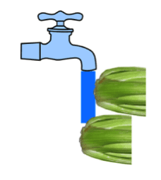 Celery and water
