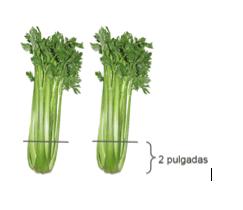 Two celery stalks
