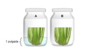 Two jars with celery stalks and one with water
