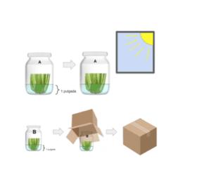 How plants grow experiment
